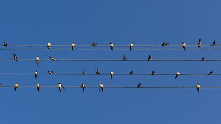 Flock of Swallows on Power Lines (16:9 Aspect Ratio) photo