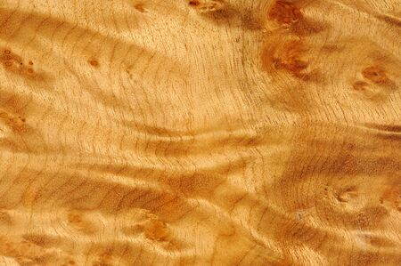 burl wood: Polished Madrone Root Wood Texture