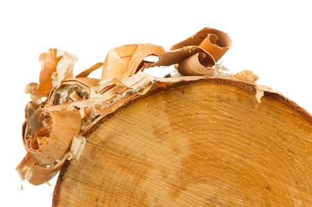 bark peeling from tree: Birch Log with Bark Peels on White Background