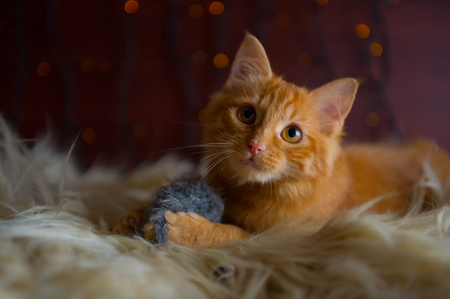 Cute Fluffy Red Kitten Playing with Toy Mouse Archivio Fotografico