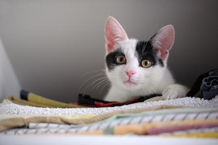 cute animal: Kitten in Wardrobe Stock Photo