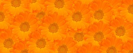 flower clip art: Calendula Flower Background