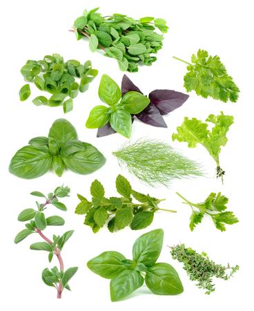 albahaca: juego de hierba fresca y verde menta incluyendo, cebolletas en rodajas, perejil, albahaca verde y rojo, eneldo, lechuga, melisa, mejorana aislada en el fondo blanco Foto de archivo