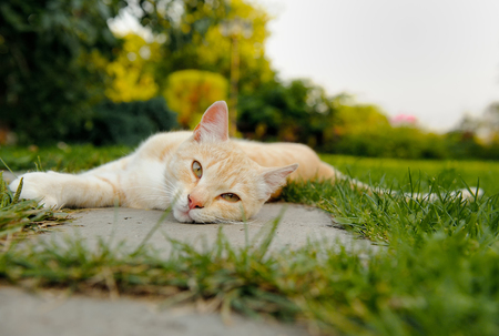 looking to camera: Cute Cat Lying on the Ground