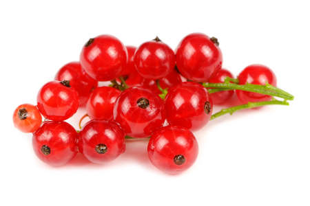 ribes: Red Currant Isolated on White Background