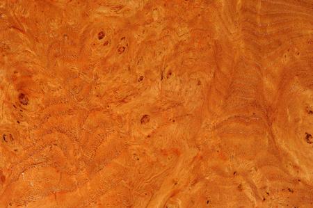 Elm Root Texture Zdjęcie Seryjne