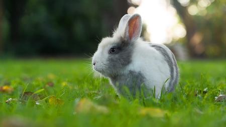 Cute Fluffy Rabbit on Green Grass in Summer (16:9 Aspect Ratio)
