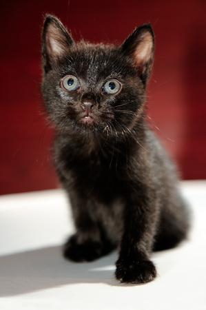 cuddly baby: Fluffy Black Kitten
