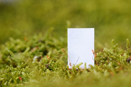 White Paper (Copy Space) on Moss Background