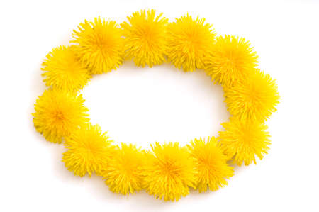 Elipse-shaped frame made of fresh yellow Dandelion flowers on white background. Love concept for Valentine's and Mother's Day. Banque d'images