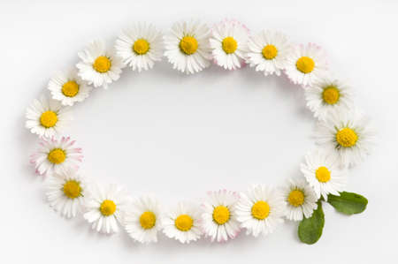 Elipse-shaped frame made of fresh white-yellow Daisy flowers on white background. Love concept for Valentine's and Mother's Day. Banque d'images