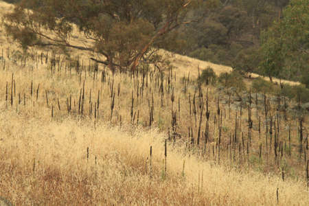 scrub grass: Dry grass