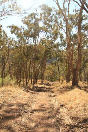 Track in bush photo