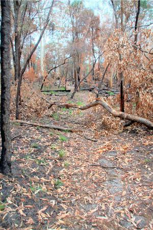 Burnt tree over path photo