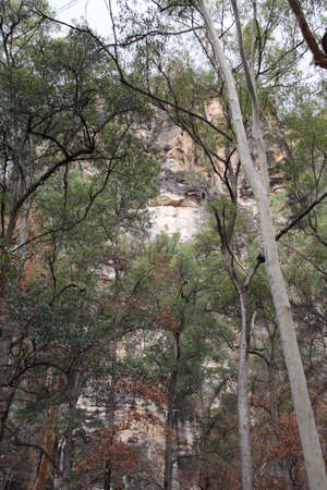 Cliff towering over forest photo