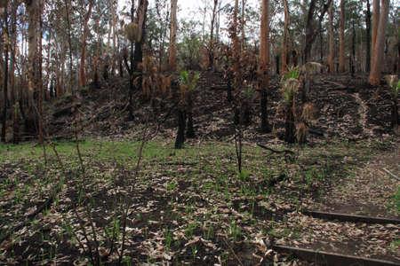 blazes: Burnt bush Stock Photo