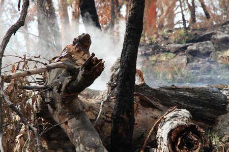 blazes: Tree on fire
