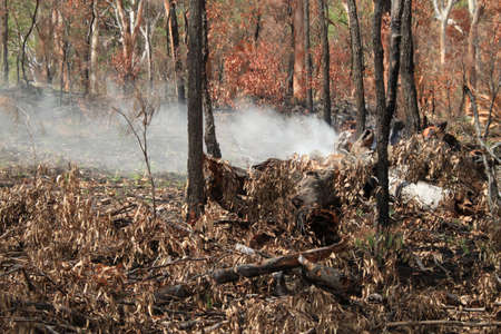 blazes: Forest fire