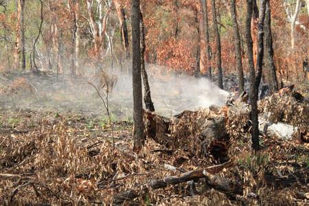bush fire: Bush fire smoke