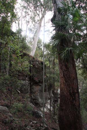 mountainous: Mountainous forest Stock Photo