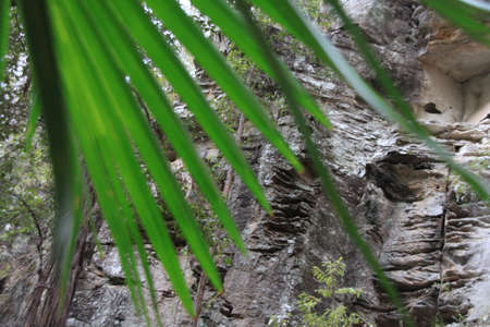 cliff face: Cliff face through palm leaves