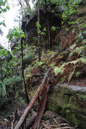 bark rain tree: Pure forest Stock Photo