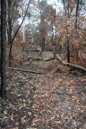Burnt tree fallen over path photo