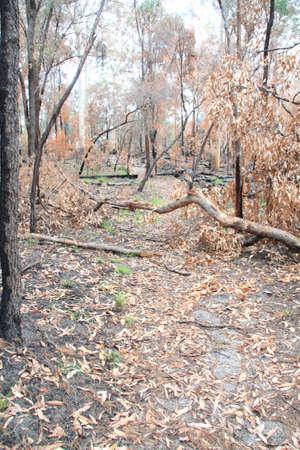 Fallen tree over path photo