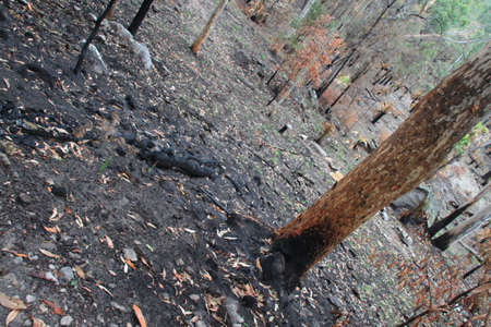 Burnt forest floor photo