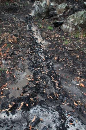 bushwalk: rocky road
