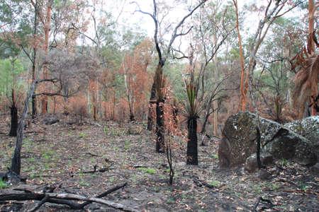 bushwalk: open forest Stock Photo