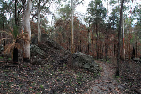 bushwalk: trekking through the bushland Stock Photo