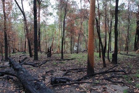 bushwalk: looking through the trees