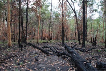 bushwalk: fallen trees