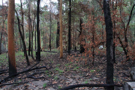 bushwalk: old and new trees