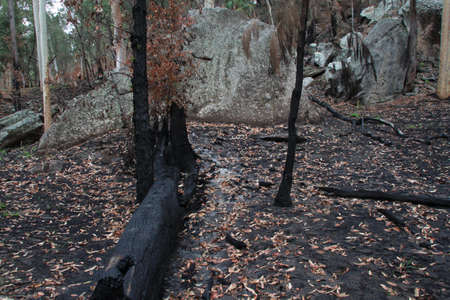 bushwalk: after the bushfire