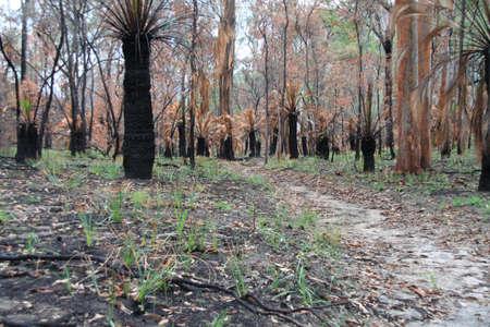 bush fire: post bush fire