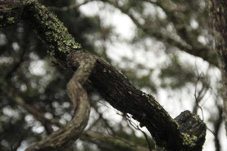 intriguing: Moss growing on the tree branches