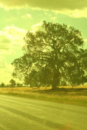 solace: abundant tree Stock Photo