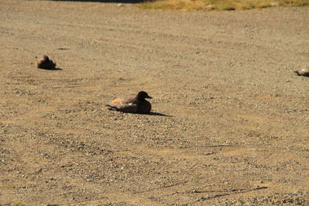 Ducks resting on road photo