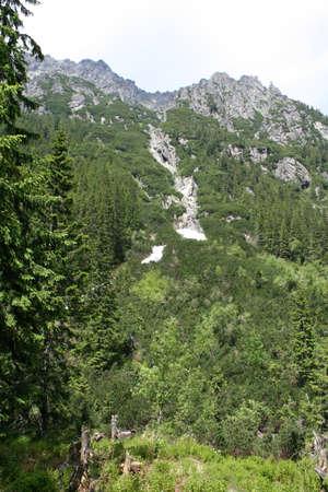 Mossy mountain photo