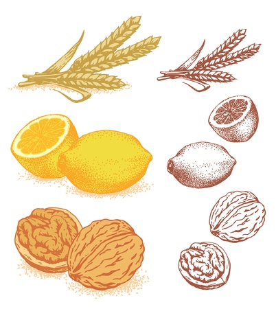 Grain, lemons, walnuts Vector illustration