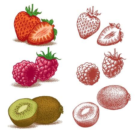 Set van vruchten zoals aardbeien, frambozen en kiwi Vector illustratie