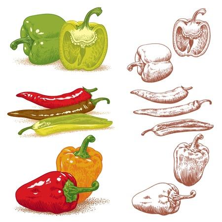 bush pepper: Peppers  Vector illustration