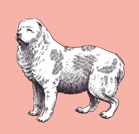 Chien de berger du Caucase mi-asiatique Illustration