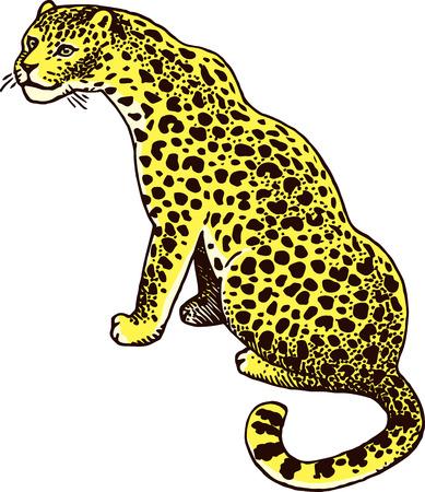moleskin: Leopard Wild Cat Vector