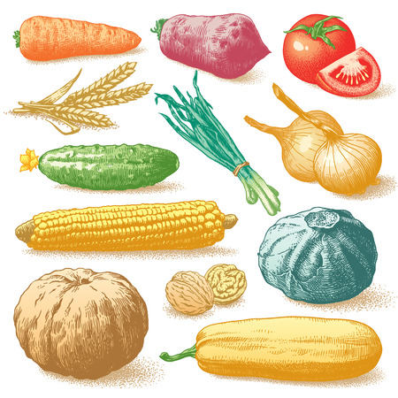Set of vegetables, fruits and plants hand drawn colour vector illustration