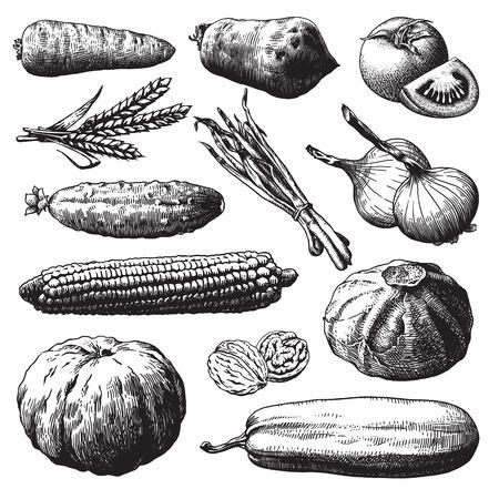 gravure: Set di verdure, frutta e piante disegnati a mano illustrazione vettoriale Vettoriali