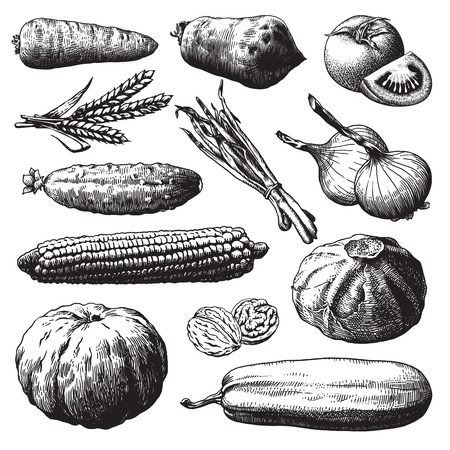 Set van groenten, fruit en planten hand getrokken vector illustratie