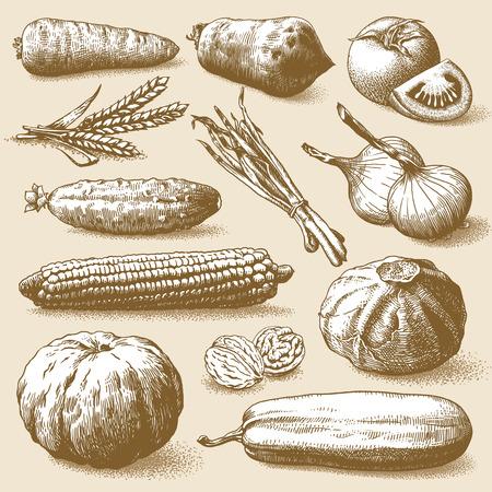 Set of vegetables, fruits and plants hand drawn vector illustration Illustration